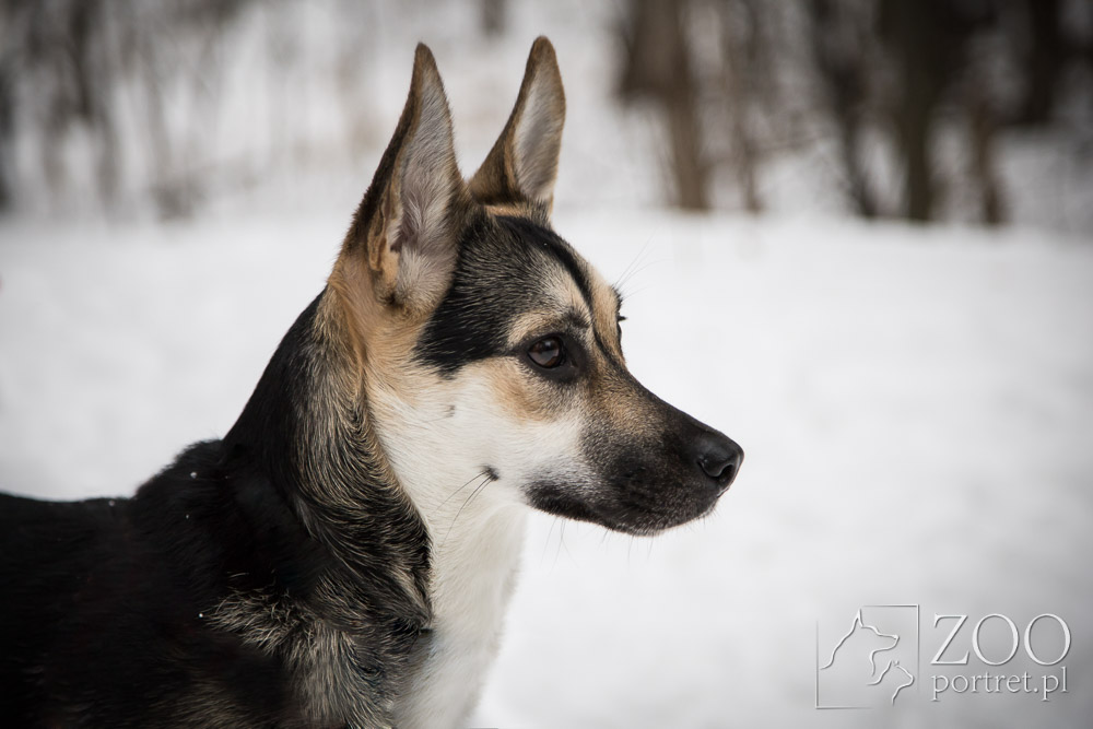 Fotograf psów w Warszawie