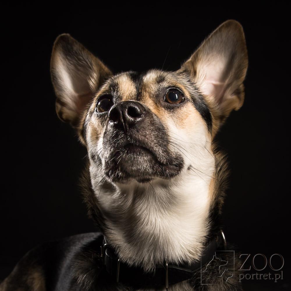 sesja studyjna dla psa