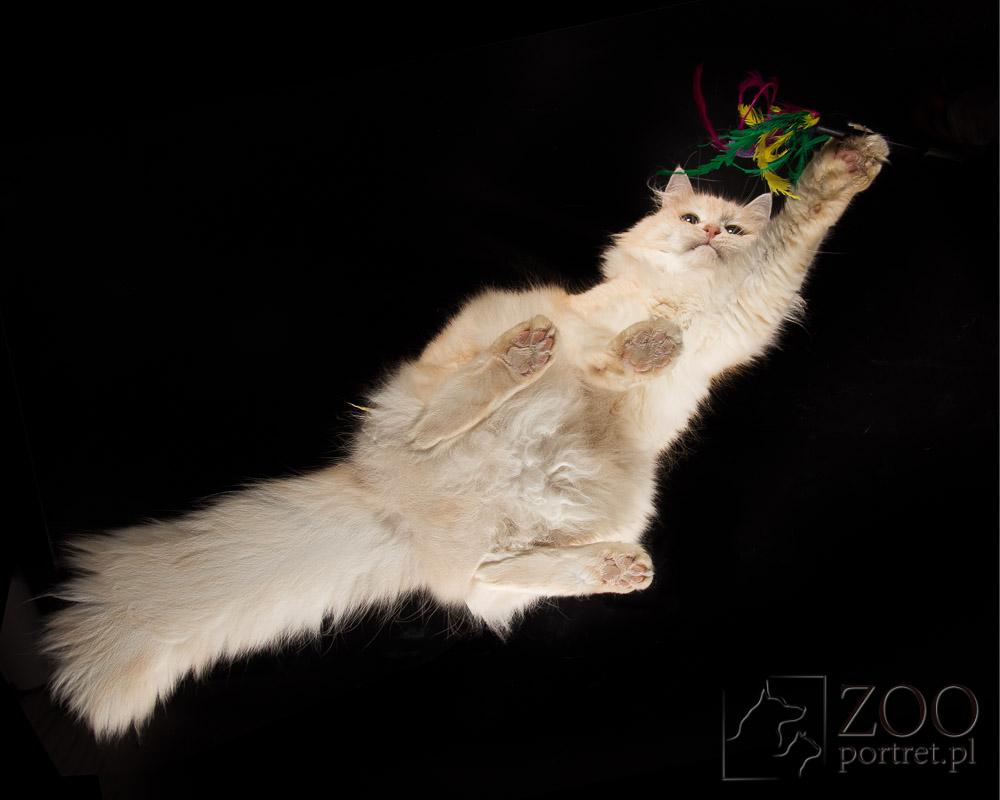 Sesja cztery łapy z kotem