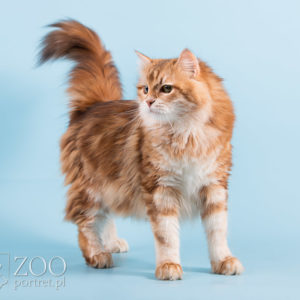 Piękny kot na sesji