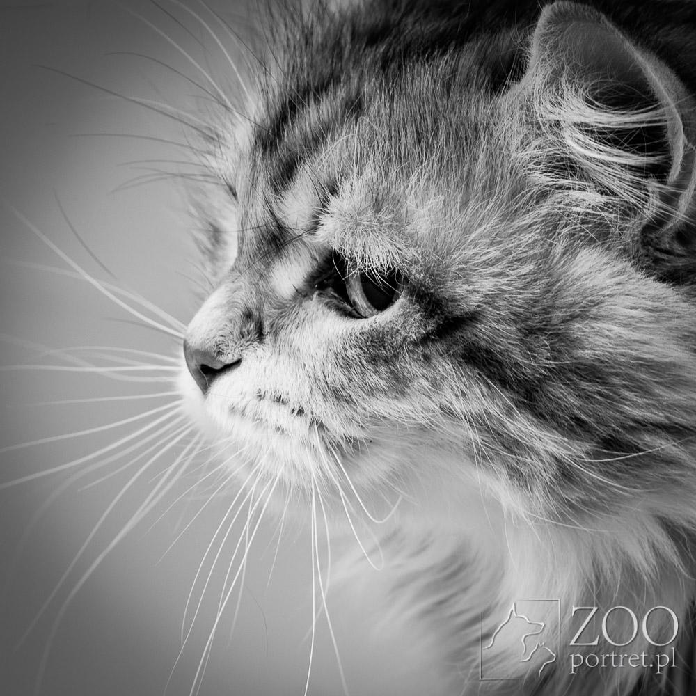 Artystyczne zdjęcia kotów
