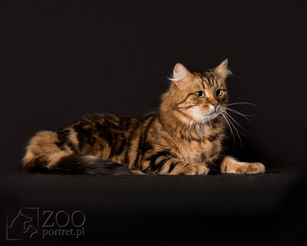 Piękne zdjęcia dla kota