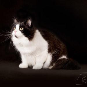Profesjonalny fotograf kotów