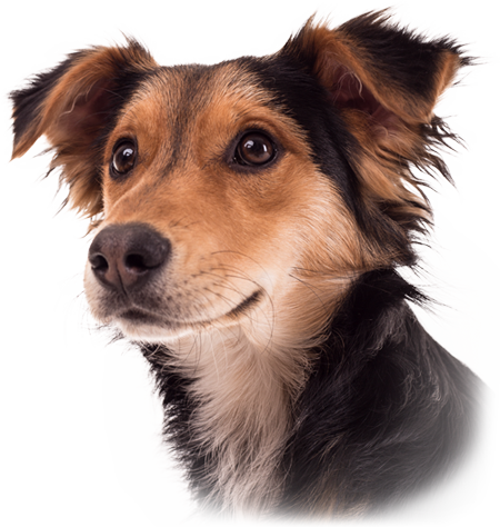 Fotografia psów