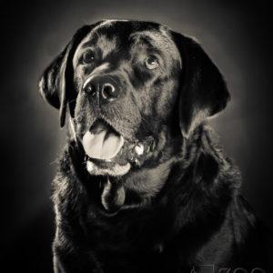 Sesja z czarnym psem