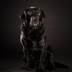 Sesja zdjęciowa dla psa