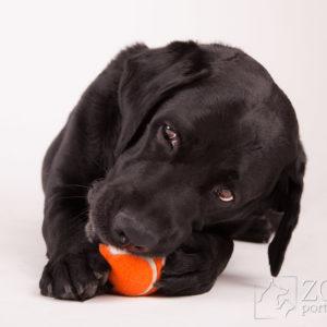 Zdjęcie psa z piłką