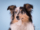 Sesja fotograficzna owczarka szetlandzkiego