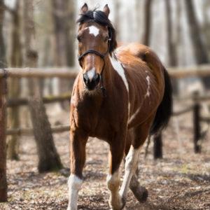 Sesja fotograficzna koni Warszawa