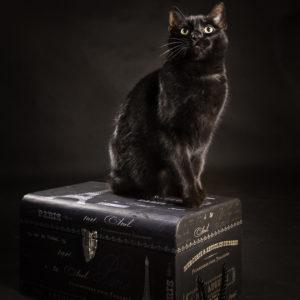 profesjonalne zdjęcia kotów