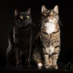 profesjonalne zdjęcia kotów w Warszawie