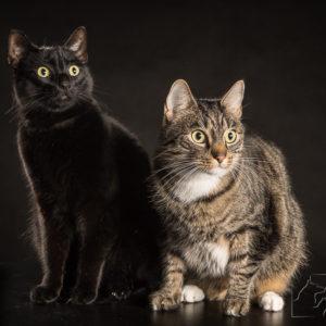 profesjonalny fotograf kotów Warszawa