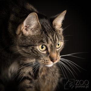 fotograf kotów