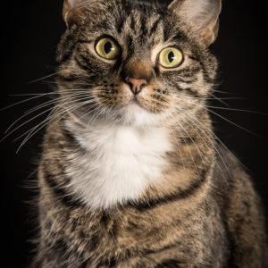 profesjonalne zdjęcia dla kota w Warszawie