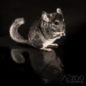 sesje zdjęciowe dla zwierząt
