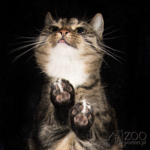 sesja fotograficzna dla kotka