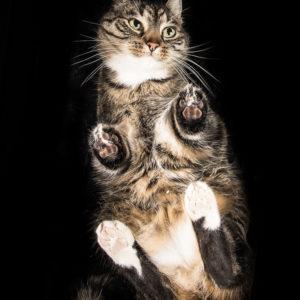 sesja fotograficzna dla kotka w Warszawie