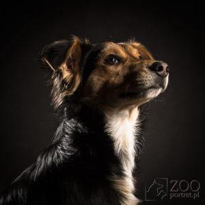 profesjonalny fotograf psów w Warszawie