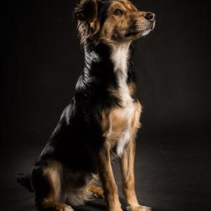 dobry fotograf psów w Warszawie