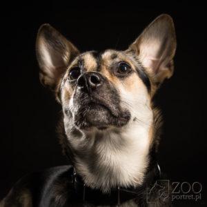 Foto-portret psa