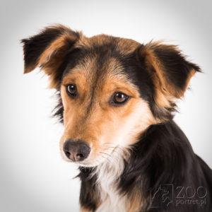 sesja portretowa dla psa