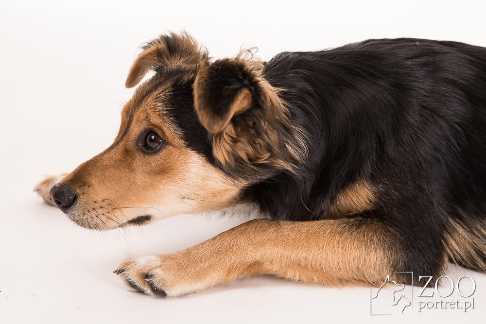 sesja fotograficzna z psem w Warszawie
