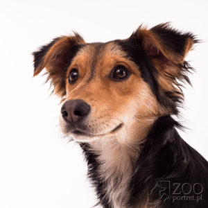 sesja zdjęciowa psa
