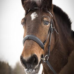 sesja zdjęciowa dla konia Warszawa