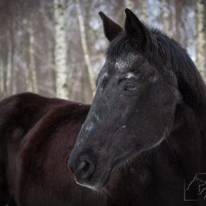 sesja fotograficzna dla konia w Warszawie