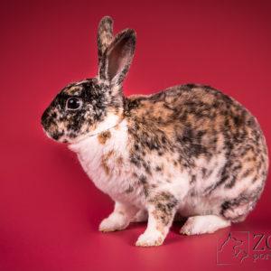 sesja fotograficzna królika w Warszawie