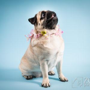 zdjęcia dla psa w studio