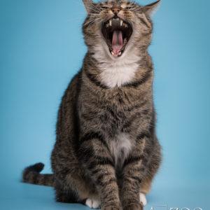 sesja fotograficzna dla kota